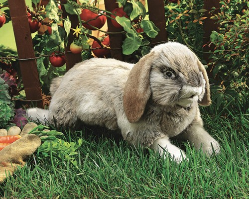 folkmanis Rabbit Holland Lop puppet