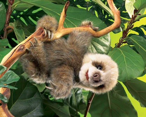 folkmanis Sloth Baby puppet